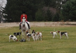 Hunting hounds image