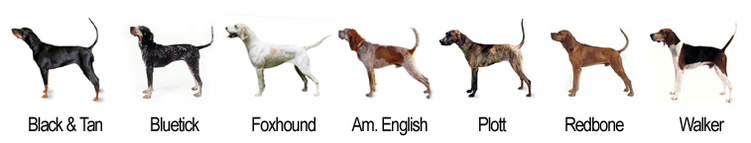The 7 primary breeds of coonhounds.